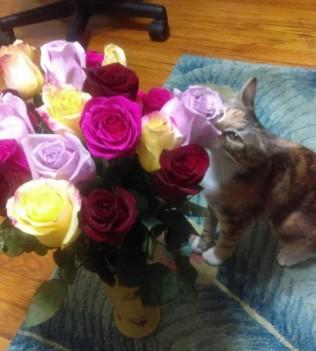 Roxy flowers