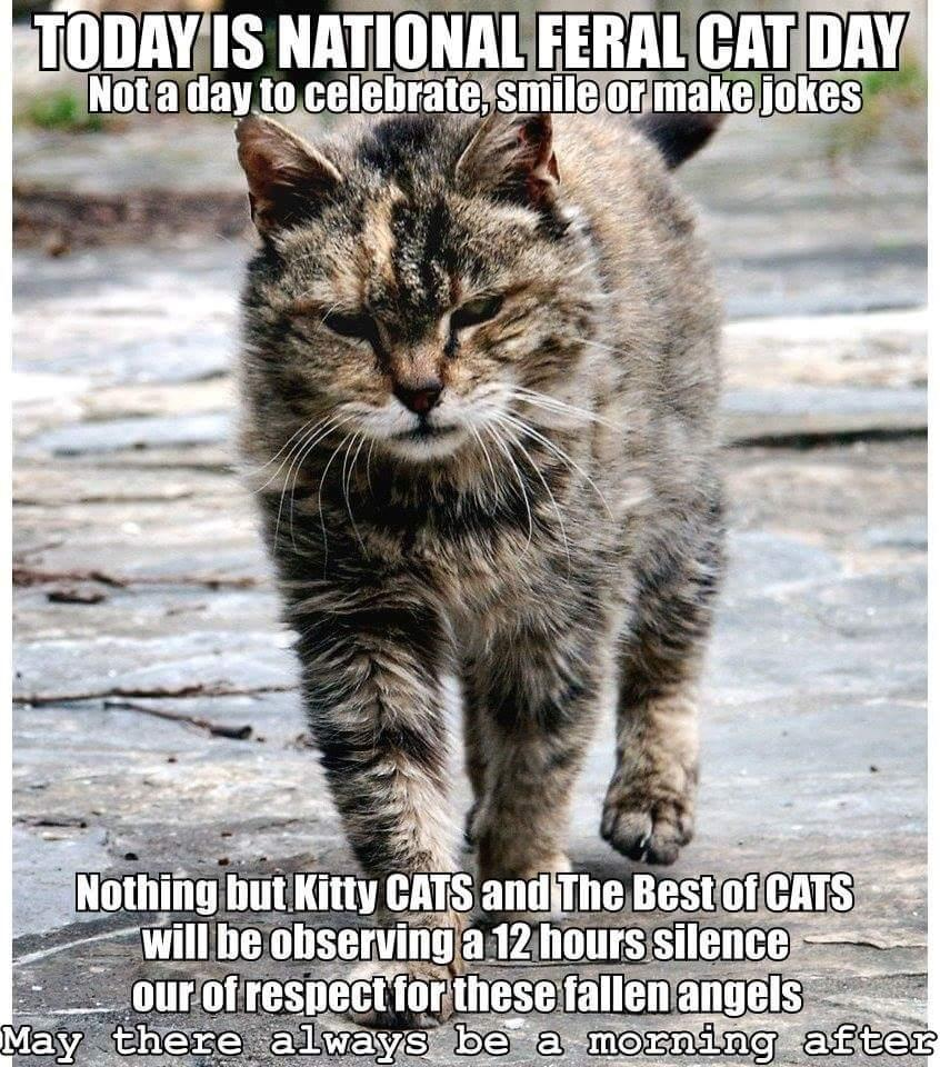 today is national feral cat day will you help us