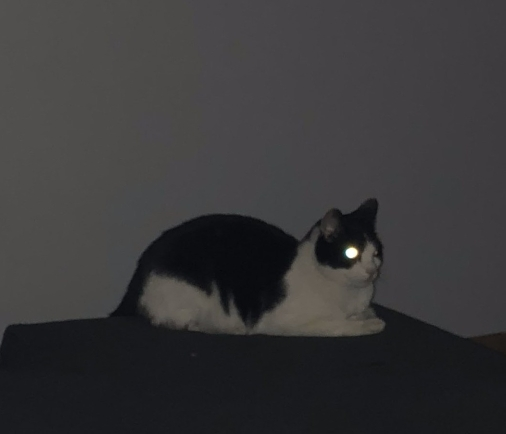 Penelope1