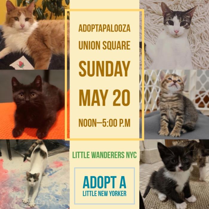 LW adoption poster